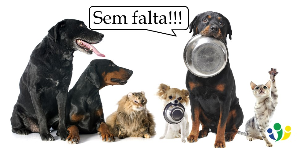 How to Say Without Fail in Portuguese