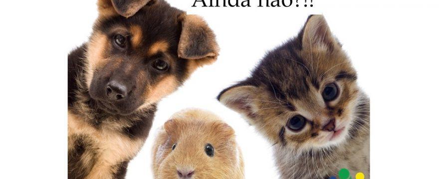 Still wondering how to say Still in Portuguese?