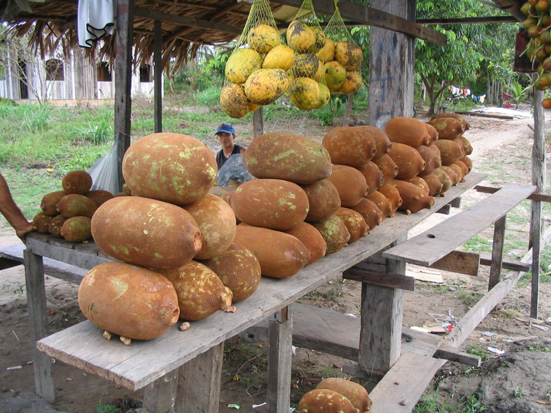 Cupuaçu - Brazilian fruit form the Amazon region