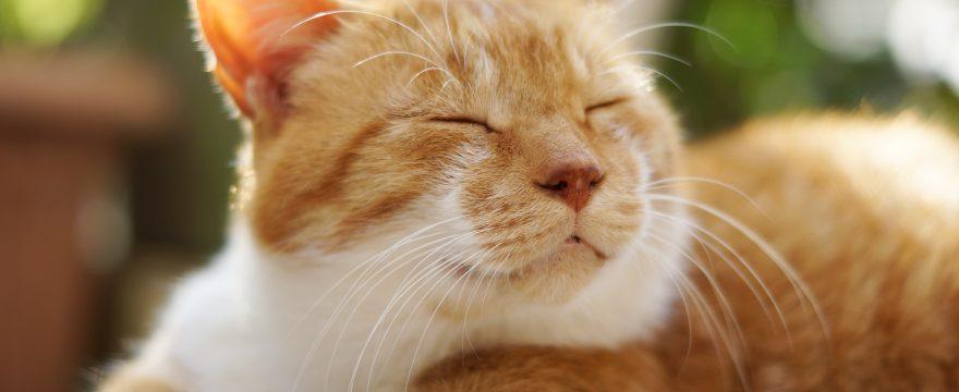 Say It Like a Brazilian: To take a nap